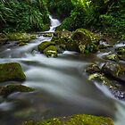 Tooloona Circuit, Lamington NP by McguiganVisuals