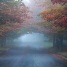 Autumn Mist by Geoff Smith