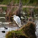 Little Egret by Odille Esmonde-Morgan