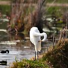 Little Egret Preening by Odille Esmonde-Morgan