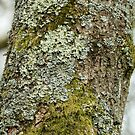 Lichen and Moss by Sue Robinson