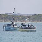 Anchored, Kangaroo Island, Australia by Margaret  Hyde