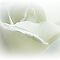 *AVATAR/White Rose or Flower - Gorgeous Flower Cards*