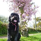 Izzy under a blossom tree by Vicki Spindler (VHS Photography)