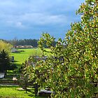 Saxony in Spring by karina5
