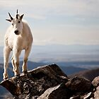 Mountain Goat on Quandry by Josh Dayton