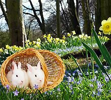 Spring Bunnies by Morag Bates