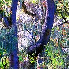 Fauvist Trees and Forrest  by Ivana Redwine