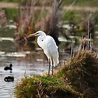 Little Egret #2 by Odille Esmonde-Morgan
