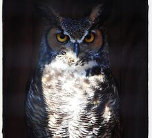 Great Horned Owl by JillSchimpf