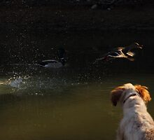 Pearl sees Mallards by Kane Slater