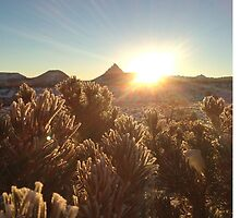 High Desert Sunrise - Winter by mr-ricardo