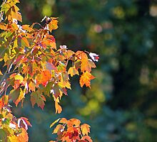 Autumn Light and Dark by Gilda Axelrod