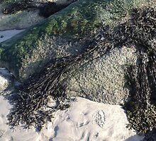 Seaweed On The Rocks At Low Tide by ArtsByDesign