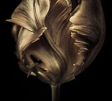 Polished Copper Tulip by alan shapiro