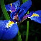 Blue flag multiproduct by ♥⊱ B. Randi Bailey
