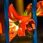 Caged Lily  by Lee Hiller