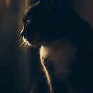 Daydreamer by HappyMelvin