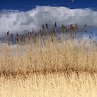 Cloud And Reeds And Reflecting Sky. by Jazzdenski