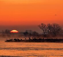 Nebraska Sandhill Crane Sunrise by ashadduck