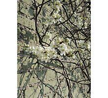 Blossom Wall Photographic Print