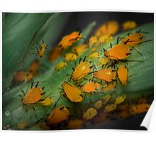 Aphids Illuminated Poster