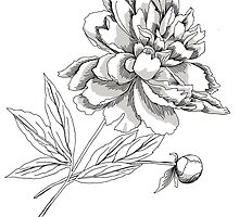 Peony.Sketch black and white by Natalia Piacheva