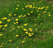Nature is Winning (1) (Taraxacum) by lezvee