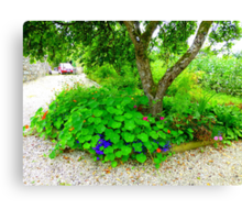 Another Corner Of The Irish Organic Garden Canvas Print