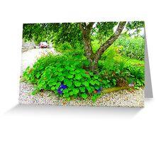 Another Corner Of The Irish Organic Garden Greeting Card
