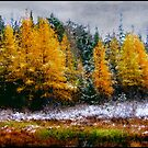 Tamarack Gold by Wayne King