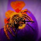 Bee on Spring Crocus #10 by Kane Slater