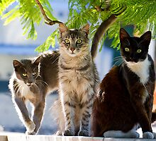 three wild cats by houenying
