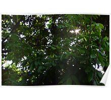 Through Leaf Poster