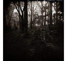 { rain in the forest } Photographic Print