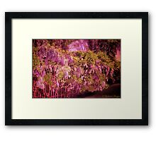 Sweet Sixteen Framed Print
