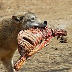 Wolf With Carcass by Tony Wilder
