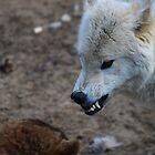 Wolf  by Tony Wilder