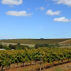 Cape Wineland Autumn by Antionette