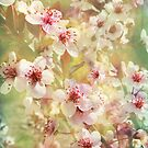 Sand Cherry Blossom Flourish by Kathilee