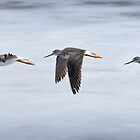 Flight of the Sandpiper by Dennis Stewart