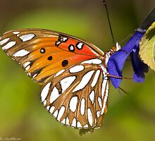 The Embrace - Passion Butterfly by Lee Hiller