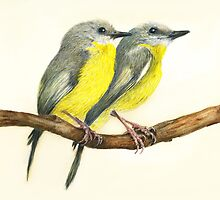 Eastern Yellow Robins by birds24