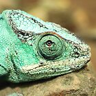 Chameleon by Briana McNair