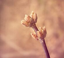 Early Signs of Spring by afeimages