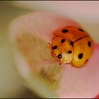Yellow Ladybeetle by Helenvandy