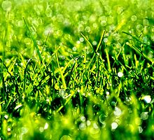 Green Green Grass of Home by Karen  Betts