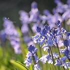 """ Visions Of Bluebells On A Spring Afternoon "" by Richard Couchman"