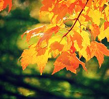 Pretty Autumn Colors 3 by ElleEmDee