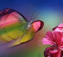 Butterfly Splendor by Jim Frazier